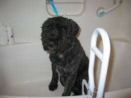 Bathtubs For Dogs Pictures Of Dog In Bath Tub After Gadget