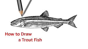 how to draw a trout fish easy drawing technique youtube