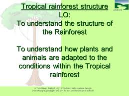 Dominant Plants Of The Tropical Rainforest - tropical rainforest structure lo to understand the structure of