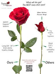 stem roses flower delivery 25 premium fresh roses free