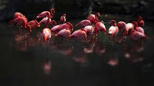 pink flamingo u2013 debrain