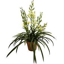orchid plant artificial cymbidium orchid plant at evergreen direct