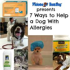 7 ways to help a dog with allergies fidose of reality
