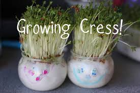 growing cress heads and cress initials the imagination tree