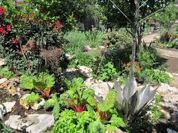 austin texas native plants look what i can do lush xeriscape landscapes in austin texas