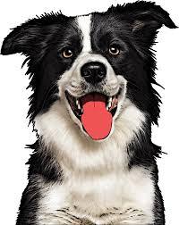 custom pet pop art dogs cats u0026 more pop your pup