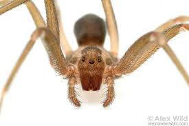 Are Spiders Attracted To Light Spiderbytes This Is A Blog About Spiders Page 2