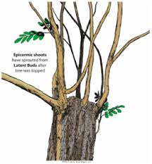 what does a tree think of pruning arbor rangers