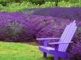 Plants That Repel Aphids by 9 Plants That Bug Bugs U2014 Including Mosquitoes