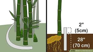 3 ways to kill bamboo wikihow