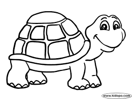 drawn turtle animal combined pencil color drawn turtle