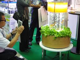 n i teijin shoji s aquaponics fish tank grows fresh vegetables