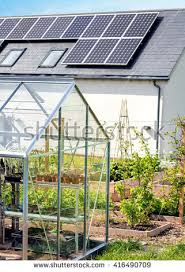 plants growing greenhouse home vegetable garden stock photo