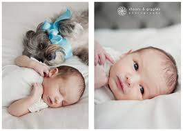 baby photography los angeles dog and baby los angeles newborn baby photography newborn