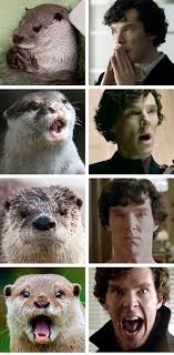 Cumberbatch Otter Meme - otters who look like benedict cumberbatch i can has cheezburger