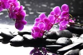 Purple Orchids Branch Purple Orchid Flower With Therapy Stones Photographic Print