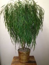 faux weeping willow tree artificial willow tree