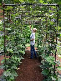 amazing vertical gardening ideas bean trellis vegetable garden
