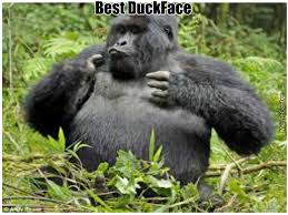 Ape Meme - monkey ape meme 3 by mojoe meme center