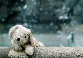 coping with loss of pet coping with pet loss in a multi pet home pet advice texvetpets
