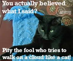 Tickled Memes - friday memes just the way you like them savannah s paw tracks