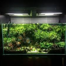 Aquascape Aquarium Designs 95 Best Aquascaping U0026 Aquarium Design Images On Pinterest