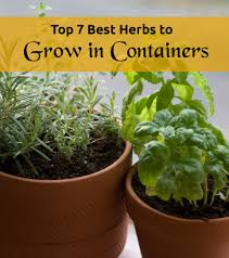 Herb Container Garden - top 7 best herbs to grow in containers jpg
