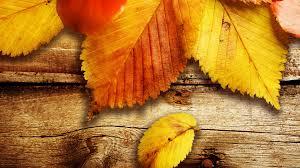 leaves on wood wallpaper 1920x1080 30804