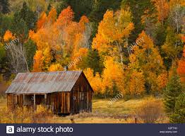 a rustic cabin in autumn in hope valley in the sierra nevada near