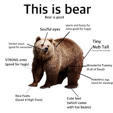 Meme Bear - this is bear bear is good proper anatomy know your meme