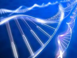 dr u0027s choice first u2014 florida u0027s leader in dna paternity testing