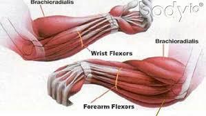 Bench Press Forearm Pain Fat Forearm Training Body Io
