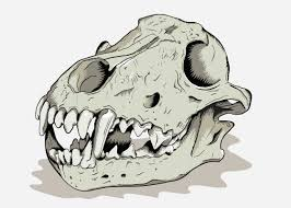 image wolf skull png jam clans wiki fandom powered by wikia
