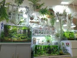 Home Aquarium Decorations Best 25 Vivarium Ideas On Pinterest Plant Fish Tank Fish Tank