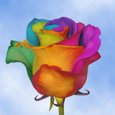 tie dye roses globalrose 50 stems of multi color rainbow roses your choice