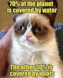 Cute Kitten Memes - th id oip sk78fzetp56bpk if2 5mghaji