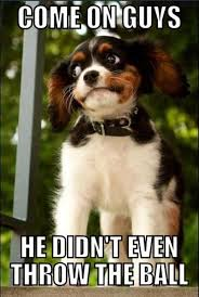 Animal Meme - he didn t throw the ball funny animal meme