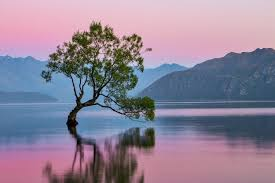 why you should visit wanaka nz the atlas