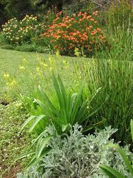 south african native plants fynbos garden backyard plantings make lush border around lawn