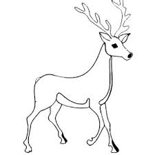 alpha male deer coloring coloring sun 14978 bestofcoloring
