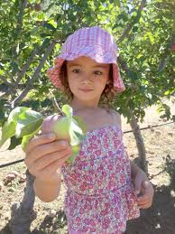 apple picking pepper design blog