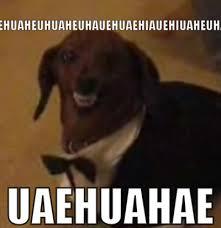 Huehuehue Meme - huehuehue dog memes and comics