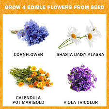flowers edible edible flower seed kit grow 4 culinary flowers from