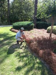 Lawn And Landscape by Fresh Longleaf Pine Straw Installed By Dalmatian Lawn And