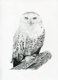 snowy owl by littledarkchild on deviantart