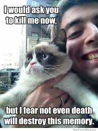 Grumpy Cat Coma Meme - 53 best i 3 the grumpy cat images on pinterest funny things