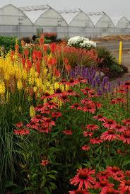 Spring Flower Garden Best 25 Yellow Perennials Ideas Only On Pinterest Black Eyed