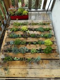 diy succulent pallet garden we went out looking for pallets the