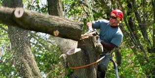 tree cutting johns creek area tree service tree company