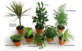 les plantes dépolluantes city plante guide de permaculture